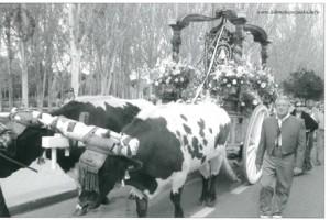 Romeria 2005 001